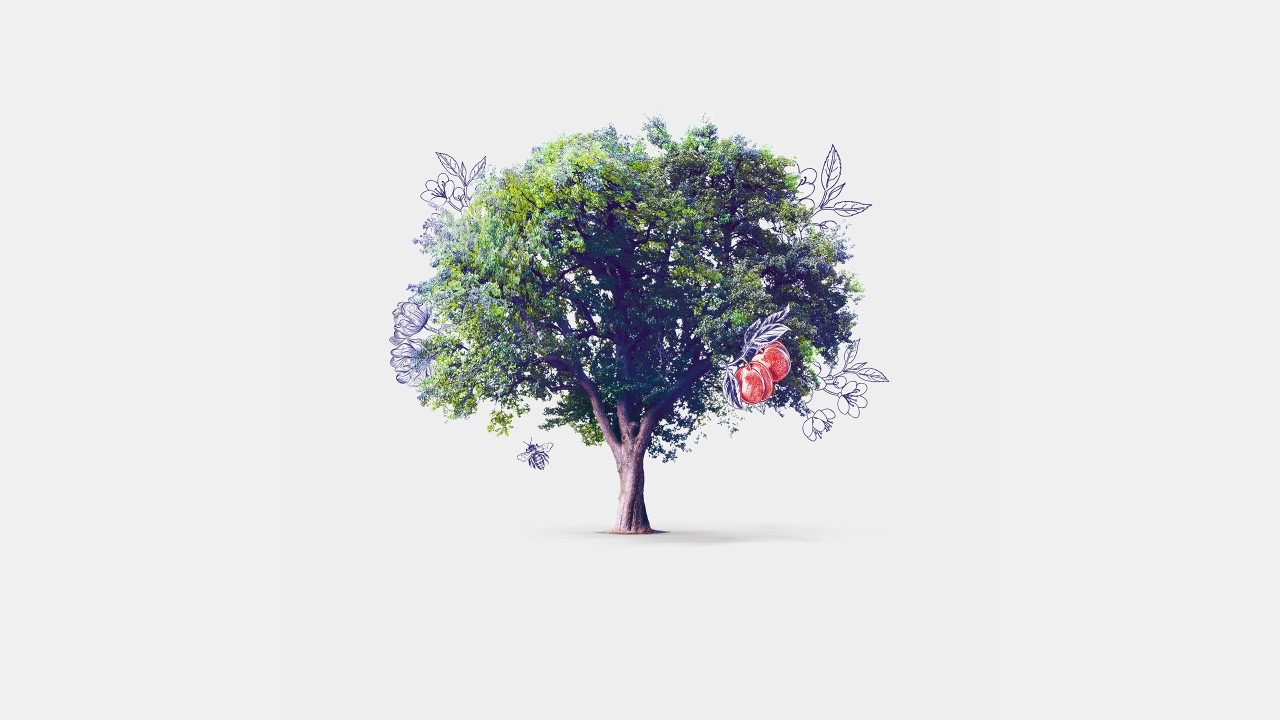 Tree with apples; image used for HSBC Vietnam Premier Family Banking page